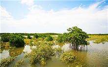 海南:试点设立的联合国家公园保护与利用