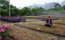 山东:苗木花卉产业,拓宽富民路