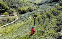 湖北:张湾区绿色经济,创造绿色福利