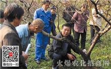 桃树冬季修剪技术