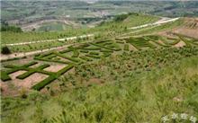 陇南优化生态环境,完成造林41.16英亩