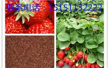 江苏省野生草莓种子市场价格,最新的野草莓种子价格检查2015年4月24日