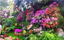上海:花入各植物园的最佳观赏等地将办花展