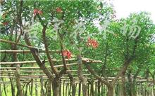 福建:漳州4个月2015年出口量保持苗木花卉稳定增长