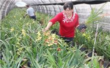 陈剑锋兰花带动农民增收致富