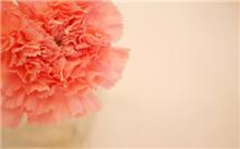防治方法康乃馨花叶病毒