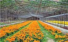河北:固安花木种植富农家收入超过1亿元