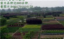台湾汉唐园林景观设计有限公司苗木基地首进海峡花卉
