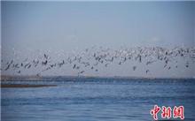 新疆:博湖县出台湿地公园管理办法