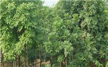 """""""红豆树""""与""""海南红豆树""""、""""花梨木""""与""""海南黄花"""