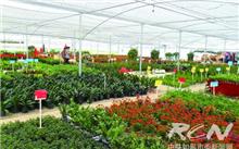 南通:如皋市磨头镇花卉苗木产业大步发展
