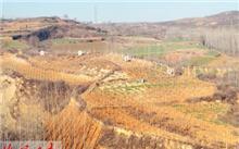 新疆吐鲁番今秋明春造林绿化全面展开