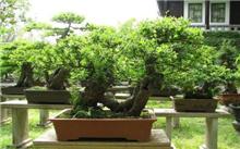 河北:肥乡城管局做好秋冬季园林绿化植物管护工作