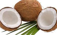 椰子二疣犀甲防治方法