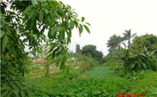 河南:一条条生机勃勃的生态廊道诠释郑州绿色梦