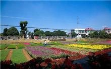 临沂:河东区花卉苗木产业步入转型升级