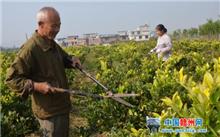 江西:龙南成功引导花卉苗木产业转型升级