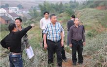 江西省龙南县开展营造林工作取得实效