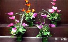 马蹄莲冬季催花的管理技术