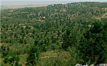 船山区计划完成营造林0.5万亩