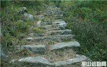 重庆:三峡库区发现800岁金丝楠木
