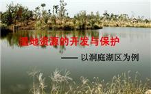 """一株洞庭湖芦苇的背后:湿地生命""""休戚与共"""""""