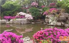 上海:2016公园文化活动杜鹃组开展现场观摩交流活动