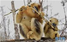 湖北省:神农架野生动物物种资源达4874种
