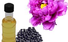 山东油用牡丹种子价格行情,最新油用牡丹种子价格查询-2016年5月8日