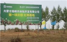 北京:绿化基金会植树治沙纪念20周年