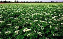 山东省:垦利县进行白榆良种繁育推广项目建设