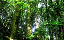 竹溪:获准建楠木种质资源原地保存库