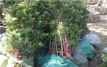 中山:致力科技与产业对接 花卉苗木产业转型升级有道