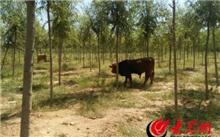 日照水库增容工程接近尾声栽植苗木33万株