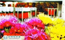 保鲜苔藓亮相昆明国际花卉展