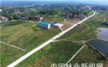 四川广安脱贫产业基地超7万亩