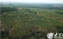 山东:日照特色经济林总产量40.22万吨 年产值32.5亿元