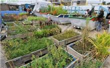成都:园林垃圾绿色处置 废弃物成有机肥料