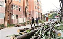 台州:小区绿化树木被修剪得光秃秃