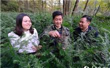 湖北保康:人工种植红豆杉喜获成功