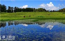 云南:滇海古渡生态湿地成为生态屏障