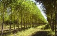 林业项目获PPP政策支持 重点领域有望加速推进