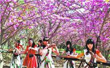 中国樱花・花海论坛首届研讨会在郑州成功举办