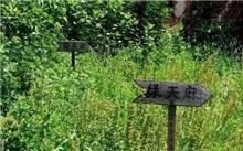 贵州:天麻种植喜丰收 推进中药材种植