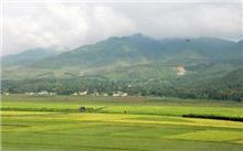 河北:明年起四类林业示范项目将获财政资金支持