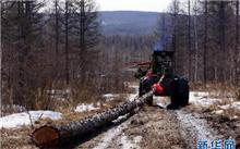 广西停止国有林场天然林商业性采伐