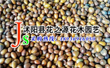 江西皂角种子价格行情,最新皂角种子价格查询-2017年1月10日