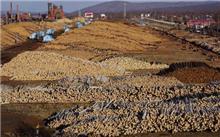 江西省全面停止天然林商业性采伐