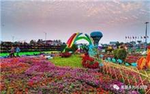 云南:海通县打造花卉特色产业群 六成销往海外