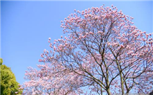 北京:城市副中心绿化将多种市花市树